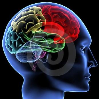cervello bugie menzogne lie to me ciarlatani culo Dr Cal Lightman